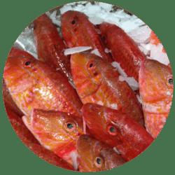 水產魚業專用電子秤|沛禮國際秤重設備專賣